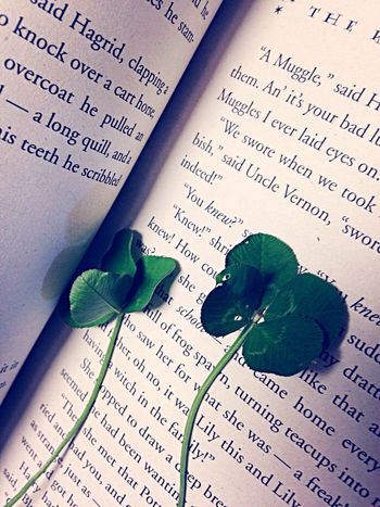 ? Four Leaf Clover Clover Lucky Luck Books Book Harry Potter Muggle