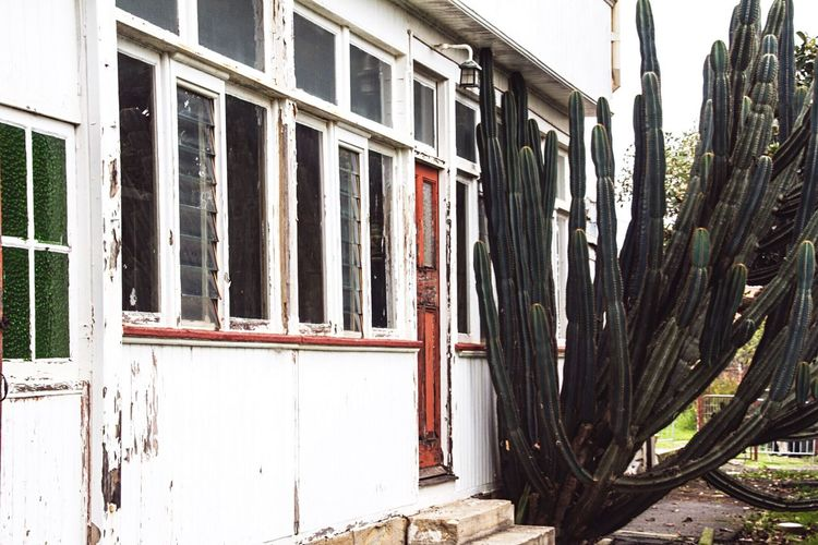Adapted To The City Deserted house with overgrown cactus Building Exterior Architecture House Vintage White Wooden House Cactus