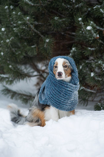 Dog looking away on snow covered tree