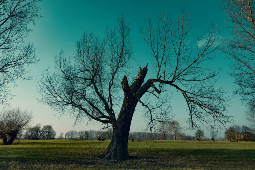 #kaiserswerthmeadows01 Bare Tree Beauty In Nature Branch Environment Field Grass Land Landscape Nature No People Outdoors Plant Scenics - Nature Sky Tranquil Scene Tranquility Tree Tree Trunk Trunk