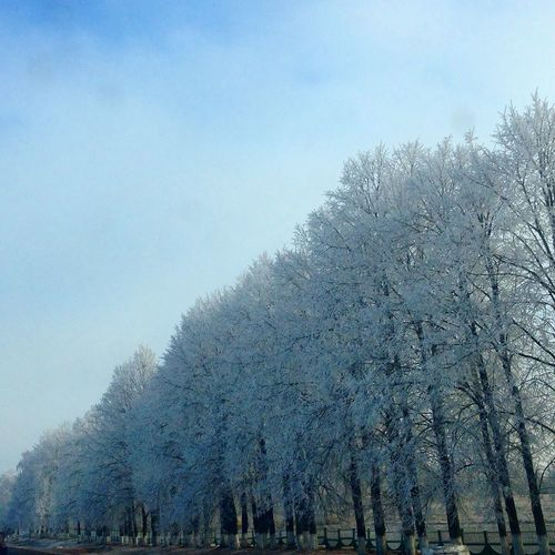 Low angle view of trees on snow covered landscape