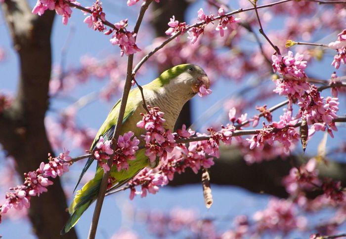 Tree Flower Fragility Pink Color Animals In The Wild EyeEm Best Shots