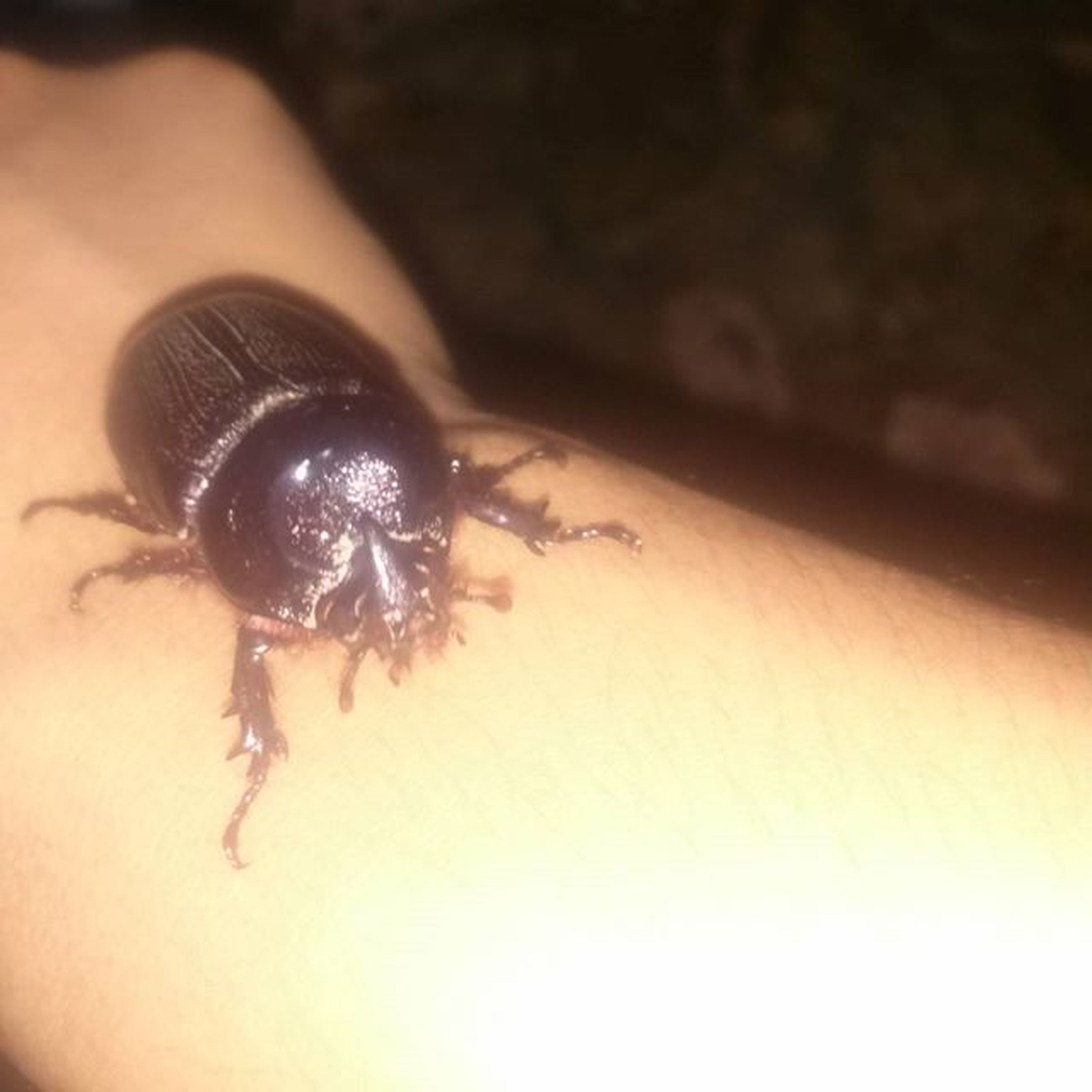 insect, indoors, one animal, close-up, animal themes, person, unrecognizable person, part of, wall - building feature, selective focus, animals in the wild, high angle view, holding, human finger, wildlife, black color, ring