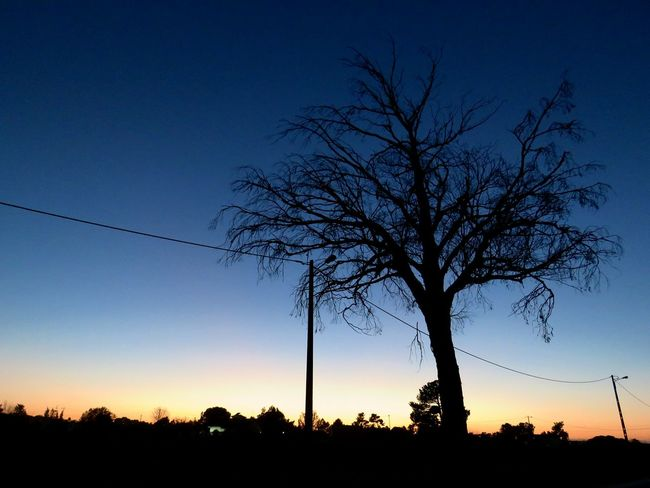 Showcase March Check This Out Dusk Dusk Colours End Of The Day After The Sunset Bare Tree Winter Tree Blue Sky Tranquility No People Tree Tree Branches Tree Sillouette Tree Against The Blue Sky Sunset Sillouette Night Fall EyeEm Best Shots Eye4photography  Winter Trees Looking Up Relaxing Time Walking Around Lonely Tree Landscapes With WhiteWall
