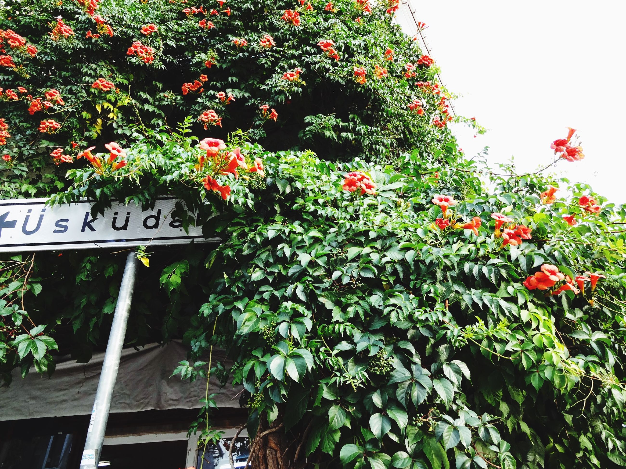 growth, flower, tree, text, low angle view, plant, freshness, leaf, red, built structure, building exterior, communication, clear sky, nature, architecture, western script, branch, green color, day, outdoors