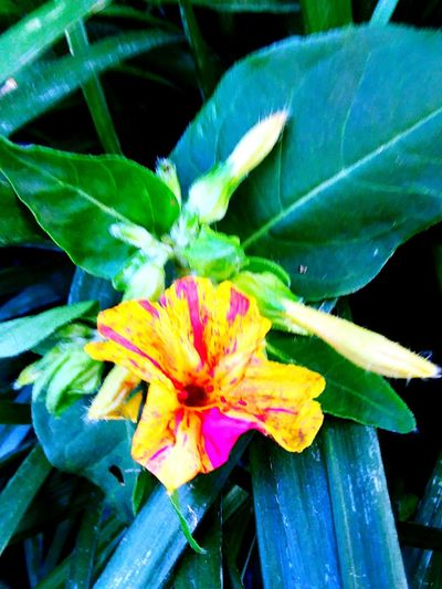 Multicolor Flowerlovers Color Green Plant Color Yellow Beauty In Nature ❤️❤️ Colorful Flower Head Passion Flower Flower Petal Leaf Close-up Plant Green Color Blooming Blossom Pollen