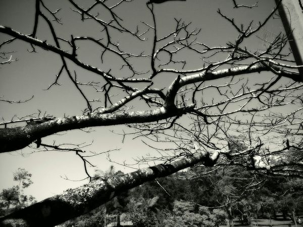 Branches Beautiful Nature Blackandwhite Brazil EyeEm Nature Lover Photography Tree Observation Urban Nature