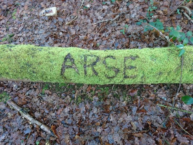 High Angle View No People Day Outdoors arse Rude Bare Tree Cold Temperature Tree Tree Trunk Graffiti