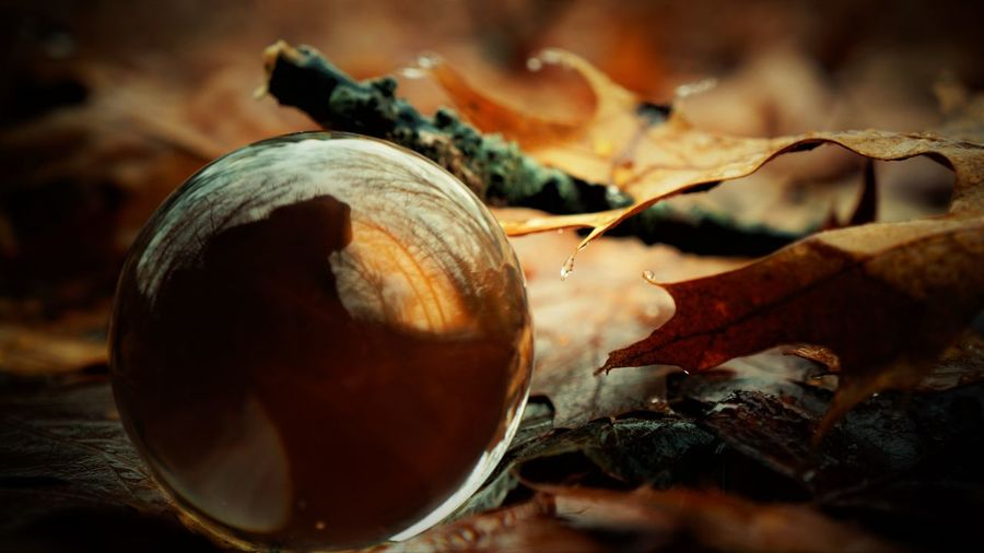 Autumn sphere Dry Leaves Shape Sphere Ball Brown Bubble Close-up Day Dry Food Freshness Glass Healthy Eating Leaf Nature No People Nut - Food Orange Color Outdoors Round Selective Focus
