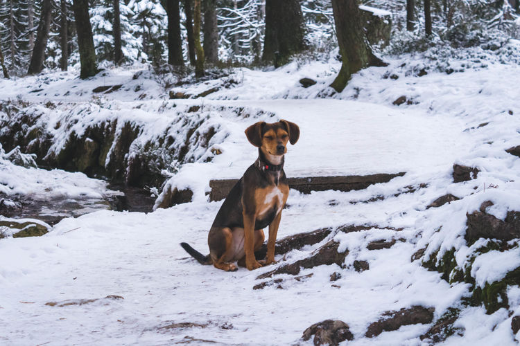 Portrait of dog on snow covered land