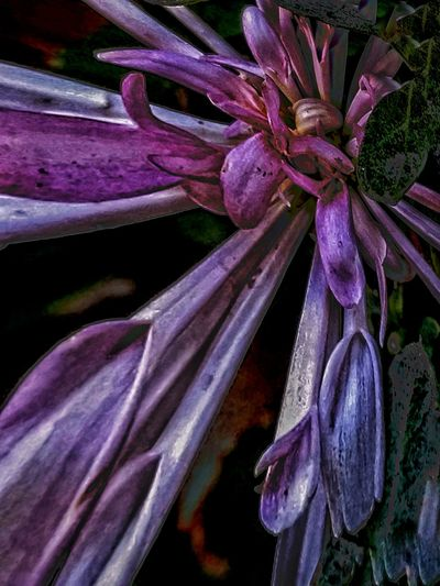 Imperfect temptress Shapes And Forms Flower Head Flower Purple Petal Orchid Close-up Plant Blossom In Bloom