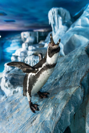 Aquarium Rio, Moscow, penguin, shark, people, children, birds, sea cat, monkey Alertness Animal Animal Themes Animals In The Wild Beak Bird Cold Temperature Day Full Length One Animal Outdoors Relaxing Rock Side View Two Animals Water Wildlife Winter Zoology