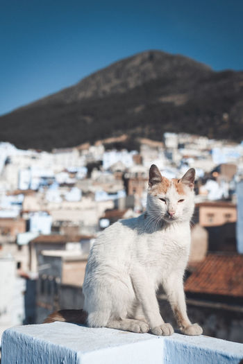 Cat sitting on a mountain against the sky