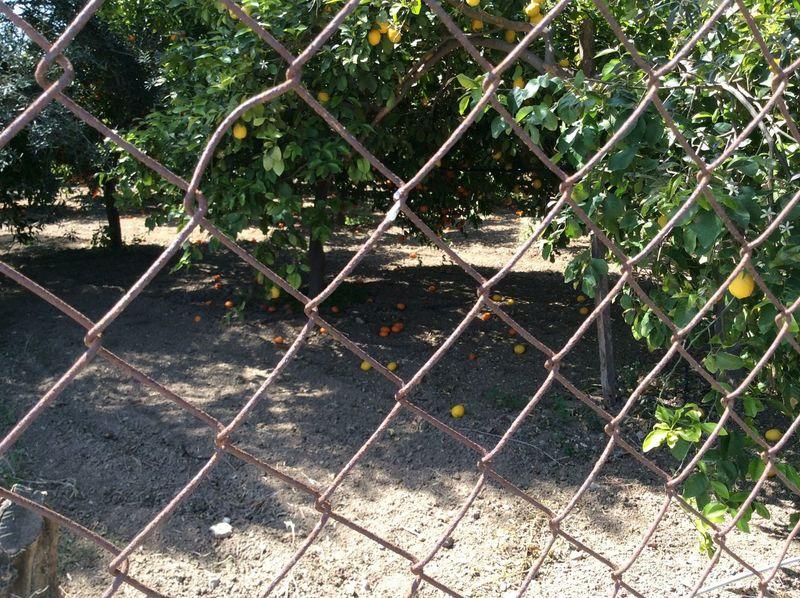 Showcase April Forest Garden Fruit Forest Orange Trees Lemon Trees Trees