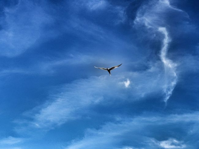 Flying Cloud - Sky Sky Mid-air Blue Low Angle View Outdoors No People Day Nature Airshow Bird Vapor Trail Nature Bright Creativity Best EyeEm Shot Bestoftheday Nature Lover Naturephotoghraphy