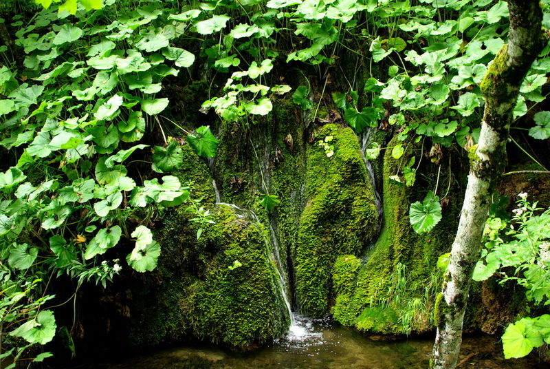 Plitvička jezera Beauty In Nature Environmental Conservation Fast Water Focus Object Foliage Green Color Green Color Green Nature Lush Foliage Motion Motion Water Moving Water Natural Park Photosynthesis Plitvicka Jezera Small Waterfall Tree Vegetation Water Water Flow Water Reflections Waterfall Waterfall_collection Waterfront Perspectives On Nature