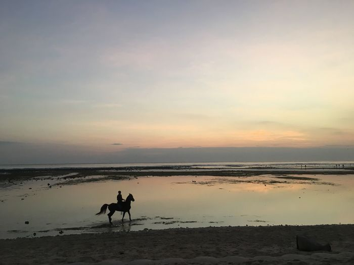 Beach Lombok Gili Trawangan Gili Islands Gili T INDONESIA Ridingintothesunset Horseriding Horse Water Sky Beach Sea Sunset Land Domestic Animals Mammal Animal Horseback Riding Silhouette Horizon Over Water Beauty In Nature Scenics - Nature