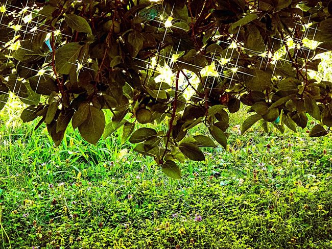 Nature Nature Photography Full Immersion Green