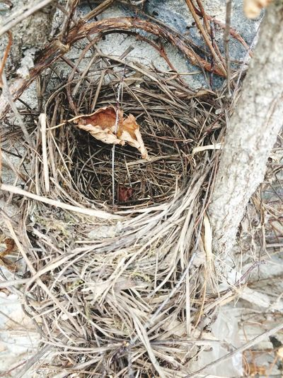 Animal Nest Bird Nest Bird Young Bird Animal Themes Animals In The Wild Wildlife Robin No People High Angle View Young Animal Twig Hay Beginnings New Life Animal Wildlife Nature Day Straw Outdoors