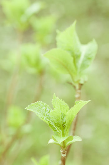Close-up of leaves growing outdoors
