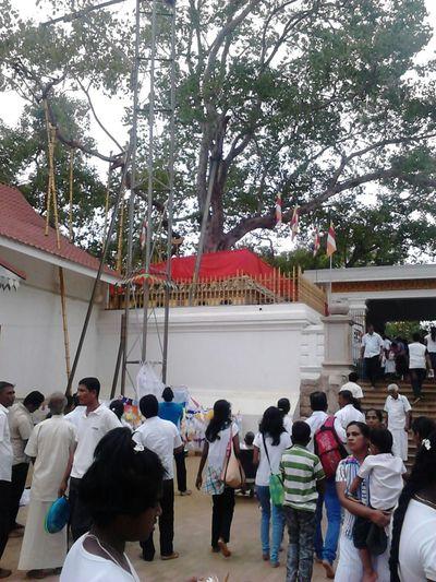 Sri maha bodiya,Sri Lanka
