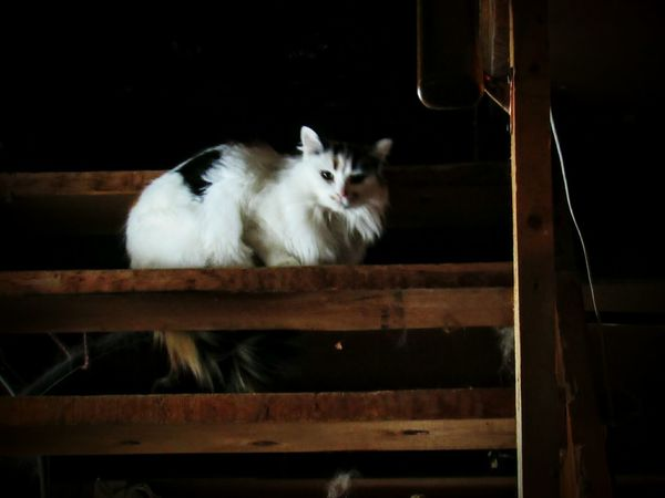 Quebec Cat Chat Colors Buitifull Cute Escalier
