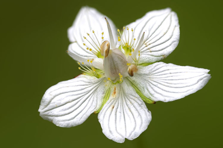Close-up of white flowering plant against gray background