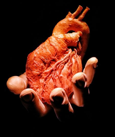 Real Heart Human Body Part Hand Heart Heart On Hand Anatomy Sciences Exposition Photos Black Background Biology Close-up Inner Power