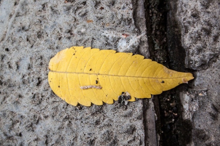 Close-up of yellow leaf on wood