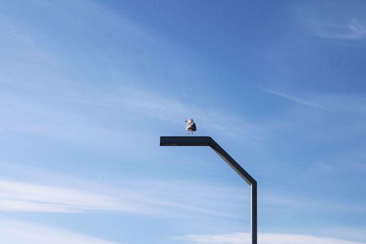 Bird in clear sky.