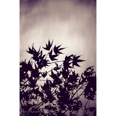 Tinythaliaphotography Fstopandstare Photography Shadows igdaily leaves treestar silhouette sky dark