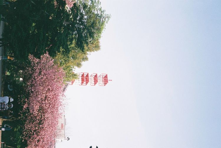 Scenic view of red flowering plant against clear sky