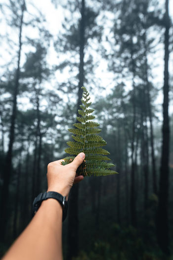 Midsection of person holding pine tree in forest