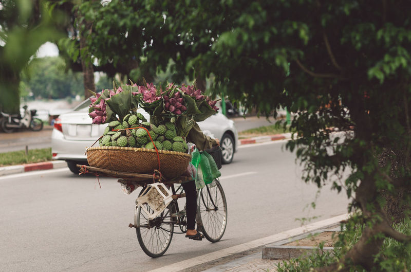 Vietnam Basket Bicycle Bicycle Basket Bouquet Car City Day Flower Flower Arrangement Flowering Plant Focus On Foreground Hanoi Land Vehicle Mode Of Transportation Motor Vehicle Nature No People Outdoors Plant Road Stationary Street Transportation Tree Wheel A New Perspective On Life