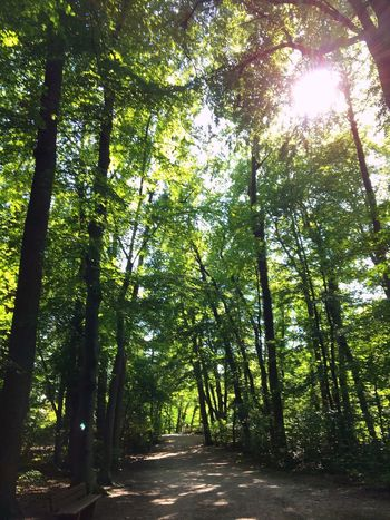 Wald in den Isarauen, Bäume, Schatten, grün, Baum, Laub, Licht, Sonne, Tree Plant Growth Sunlight Beauty In Nature Green Color Nature Forest Tranquility No People Tranquil Scene Scenics - Nature Outdoors