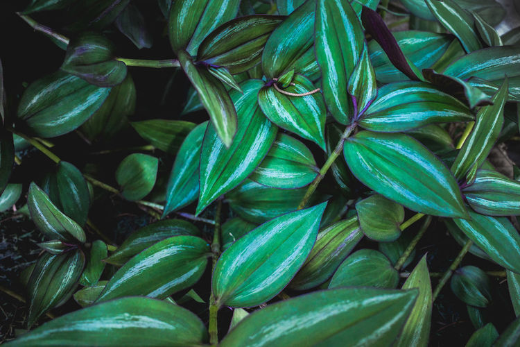Tropical green leaves plant texture background.