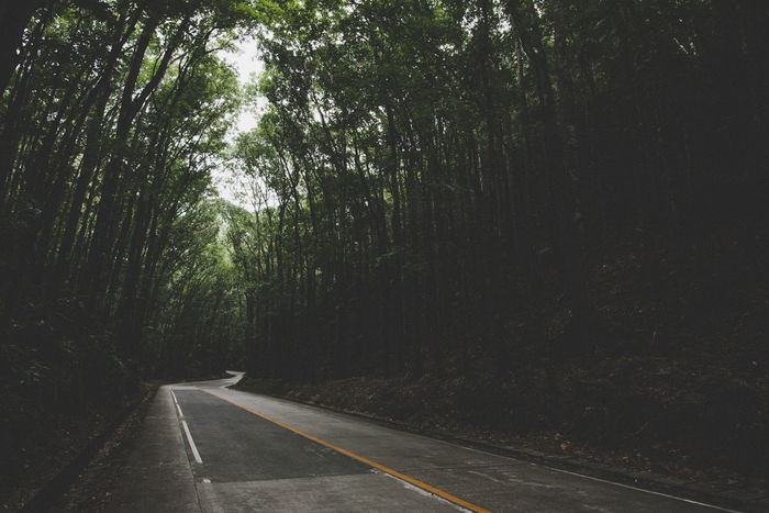 Tidy Man made forest Bohol Philippines Man Made Forest Beauty In Nature Day Diminishing Perspective Direction Dividing Line Empty Road Forest Growth Land Marking Nature No People Outdoors Plant Road Road Marking Sign Symbol The Way Forward Tranquility Transportation Tree