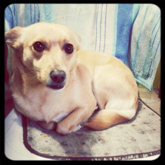 #photo #dog