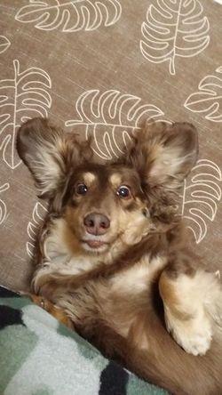 Dog Love Dog 愛犬
