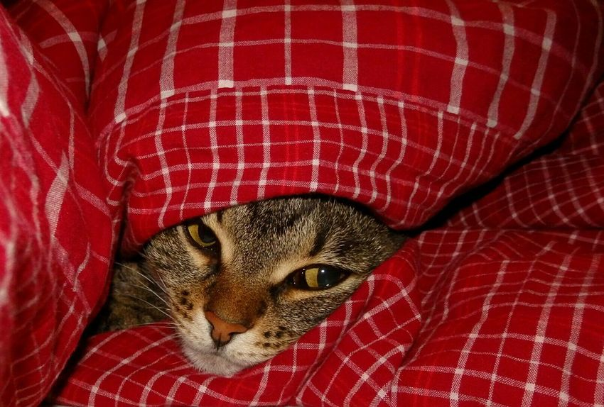 Good night! ❄🌜 Cat Catlady Catnose Cateyes Inthebed Goodnight EyeEm Cats Lover Animal_collection Showcase: December Ilovemycat Catface It's Cold Outside