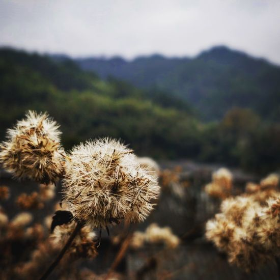 Nature Plant Focus On Foreground No People Uncultivated Flower Close-up Tranquility Outdoors Closing Beauty In Nature Day Fragility Growth Thistle Flower Head Sky Freshness