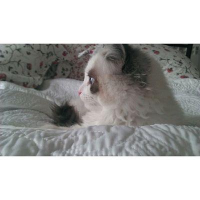 Perfiles gatunos Srenrique Gatolicismo Cat