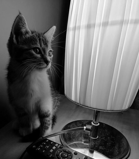 Close-Up Of Kitten By Electric Lamp On Table At Home