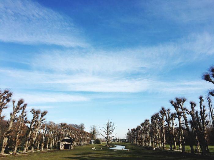 Winterday estate Elswoud Trees In Winter-time Trees In A Row Clouds And Sky Estate Elswoud Sunnyday Bluesky Treescape Wintertime