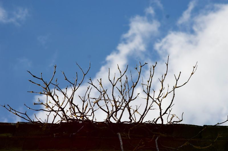 Sky Cloud - Sky Bare Tree Nature Plant No People Silhouette Tranquility Blue Day