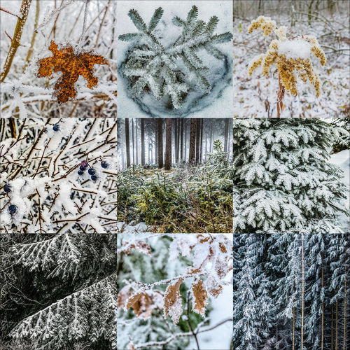 Collage Seriell Stimmung Winter Beauty In Nature Close-up Cold Temperature Day Growth Leaf Nature No People Outdoors Plant Snow Snowflake Tableau Tree Tree Trunk Winter