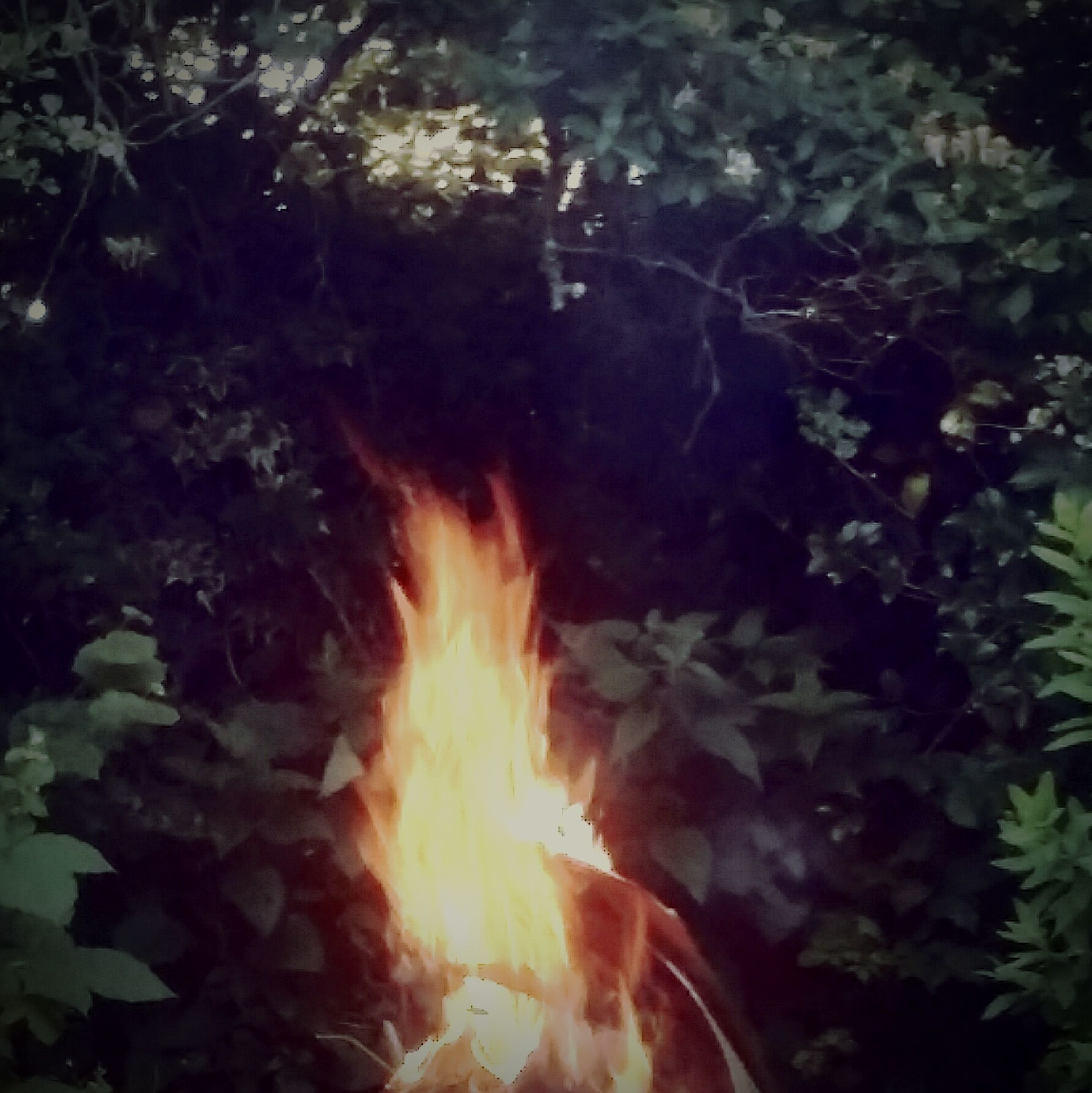 burning, flame, fire - natural phenomenon, heat - temperature, bonfire, fire, close-up, firewood, glowing, nature, heat, outdoors, campfire, no people, plant, growth, orange color, beauty in nature, tranquility, sunbeam, selective focus, focus on foreground, dark