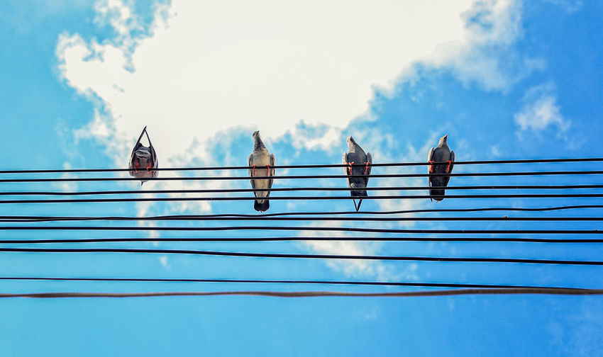 Beautiful bird is on the wire cable. many birds on the electric wunder blue sky at sunny day.