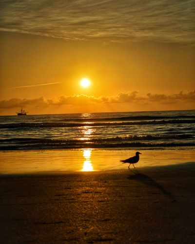 Beautiful ocean sunrise. Ocean Sun Sunrise Saturation Colorful Bird Shrimp Boat Beauty In Nature Water Sand Daytona Beach Florida Beach Photography
