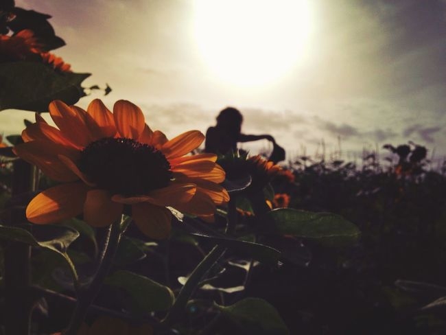 Friends & sunflowers ❤️🌻 IPhoneography Nature Sunflower EyeEm Best Shots Silhouette NEM Memories Creative Light And Shadow
